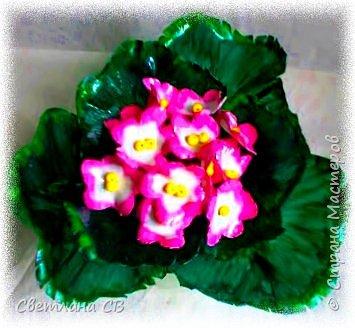Фиалка розовая фото 5