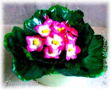 Фиалка розовая фото 1