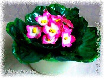 Фиалка розовая фото 4