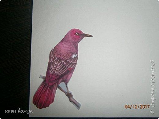 Всем привет. Сегодня у меня две разноплановые открытки. С шарами- это пришел новый ножик для машинки и такая с птичкой- бумага дюже красивая. фото 7