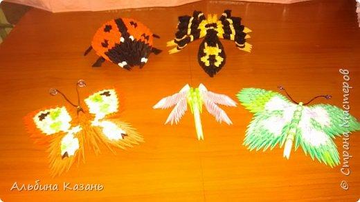 Мои насекомые:паук,бабочки,стрекоза,божья коровка фото 1