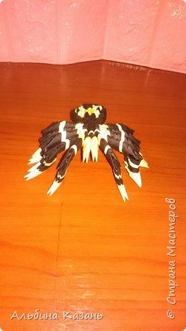Мои насекомые:паук,бабочки,стрекоза,божья коровка фото 6