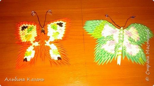 Мои насекомые:паук,бабочки,стрекоза,божья коровка фото 8