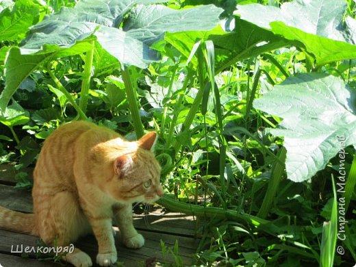 Мы с Елисеем не только гуляем и развлекаемся, но ещё и работаем. Здесь он мне помогает цветочки поливать. фото 41