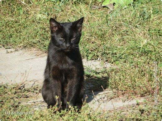 Вот ещё одно моё счастье. Мой любимый Лучик. Он мне помогает, когда Елисея нет. Урожай свёклы охраняет (от мышей). фото 26