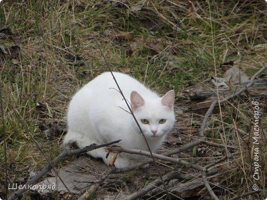 Вот ещё одно моё счастье. Мой любимый Лучик. Он мне помогает, когда Елисея нет. Урожай свёклы охраняет (от мышей). фото 22