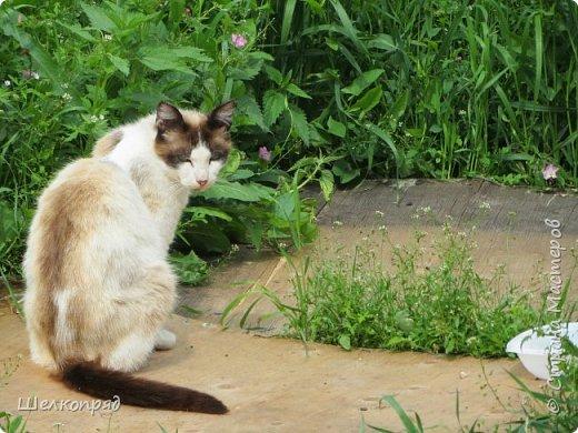 Мы с Елисеем не только гуляем и развлекаемся, но ещё и работаем. Здесь он мне помогает цветочки поливать. фото 111