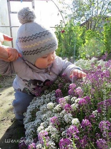 Мы с Елисеем не только гуляем и развлекаемся, но ещё и работаем. Здесь он мне помогает цветочки поливать. фото 61