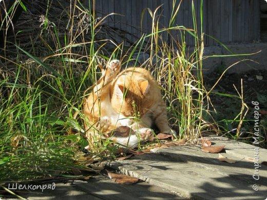 Вот ещё одно моё счастье. Мой любимый Лучик. Он мне помогает, когда Елисея нет. Урожай свёклы охраняет (от мышей). фото 4