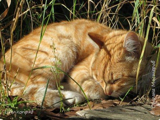 Вот ещё одно моё счастье. Мой любимый Лучик. Он мне помогает, когда Елисея нет. Урожай свёклы охраняет (от мышей). фото 8