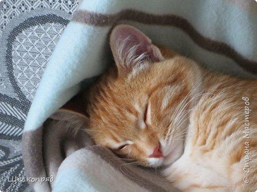 Вот ещё одно моё счастье. Мой любимый Лучик. Он мне помогает, когда Елисея нет. Урожай свёклы охраняет (от мышей). фото 74