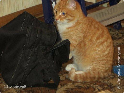 Вот ещё одно моё счастье. Мой любимый Лучик. Он мне помогает, когда Елисея нет. Урожай свёклы охраняет (от мышей). фото 63