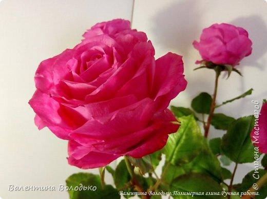 Добрый вечер мастера и мастерицы!!!!Перед вами очередные розы. фото 6
