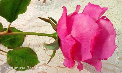 Добрый вечер мастера и мастерицы!!!!Перед вами очередные розы. фото 4