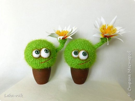 кактусы