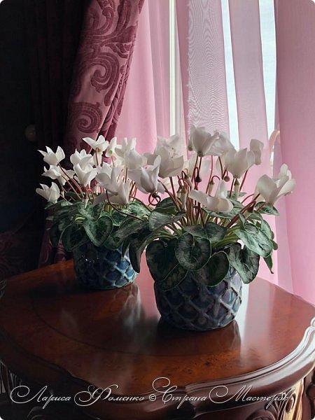 Цикламены из холодного фарфора. фото 4
