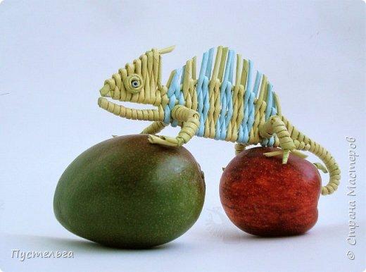 Маленькое домашнее животное - хамелеон.  В длину всего 20 см, а по высоте вместе с лапками - 8 см. фото 2