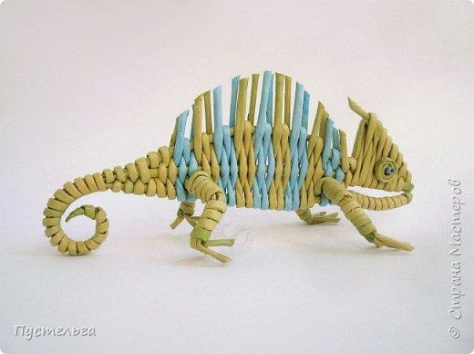 Маленькое домашнее животное - хамелеон.  В длину всего 20 см, а по высоте вместе с лапками - 8 см. фото 15
