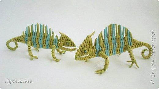 Маленькое домашнее животное - хамелеон.  В длину всего 20 см, а по высоте вместе с лапками - 8 см. фото 16