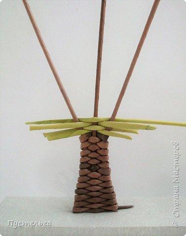 """Это ёлочка и яблонька для моих юных мастеров. Трубочки скручены из трети листа потребительской бумаги """"Кондопога"""" на спицу 1,2 мм. Ёлочка - 4 коричневых, 9 зелёных трубочек. Яблоня - 6 коричневых, 10 зелёных, 2 красные трубочки. Подставочки 3 + 3 трубочки. Основы сухие, остальные трубочки слегка влажные. фото 15"""
