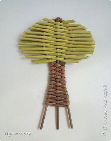 """Это ёлочка и яблонька для моих юных мастеров. Трубочки скручены из трети листа потребительской бумаги """"Кондопога"""" на спицу 1,2 мм. Ёлочка - 4 коричневых, 9 зелёных трубочек. Яблоня - 6 коричневых, 10 зелёных, 2 красные трубочки. Подставочки 3 + 3 трубочки. Основы сухие, остальные трубочки слегка влажные. фото 18"""
