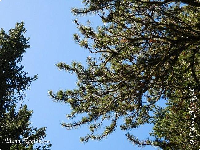 Первый выход в горы после долгой зимы, благо до них езды около часа... Пеший маршрут 15 км с подъемом на 300 метров. Озеро Барьер .  Хорошая солнечная погода, синее небо, свежий воздух и запахи весны! фото 4