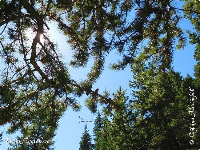 Первый выход в горы после долгой зимы, благо до них езды около часа... Пеший маршрут 15 км с подъемом на 300 метров. Озеро Барьер .  Хорошая солнечная погода, синее небо, свежий воздух и запахи весны! фото 9