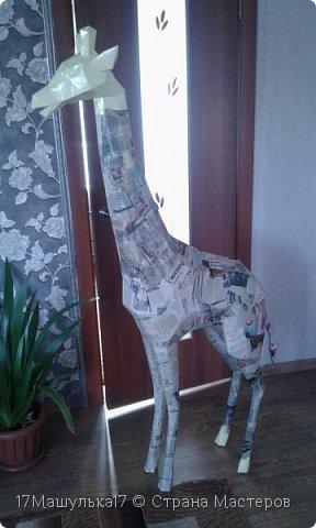 """Добрый день! Приветствую всех!  Давно меня здесь не было) Хочу представить вам мою скульптура - жирафа! Делала я её для сада, в высоту получился 160 см и вес 5 кг) Расскажу как все начиналось, месяца два назад я заинтересовалась паперкрафтом и полностью погрузилась в мир бумажных фигур, я целыми днями сидела и вдохновлялась людьми, которые создают разные шедевры из бумаги. Кому интересно, есть группа в контакте - """"Отборная макулатура"""" , где  есть множество разверток на любой вкус)  Так вот, первой моей работы была кошка, к сожалению фото не прилагаю, потому что не фотографировала её. Затем я сделала трофей панды, фото вы увидите ниже. Ну а потом я долго думала над тем, почему бы мне не сделать большую скульптуру в сад?  На следующий день я пошла купила плотную бумагу и с помощью специальной программы сделала развертку под рост 160см. Затем я распечатала детали и понеслааась работа) Делала я его месяц. Расскажу всё по порядку....   фото 4"""
