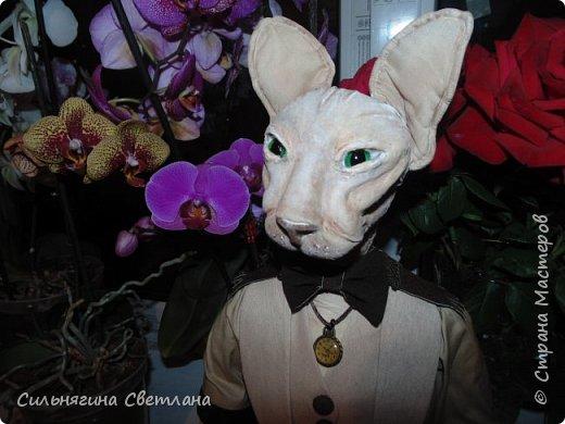 Кот сфинкс  фото 1