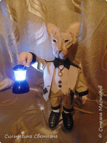 Кот сфинкс  фото 2