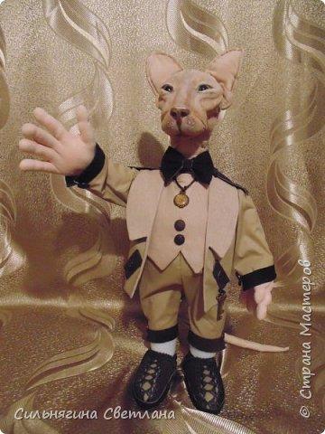 Кот сфинкс  фото 5