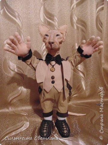 Кот сфинкс  фото 6
