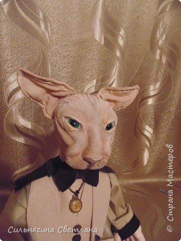 Кот сфинкс  фото 8