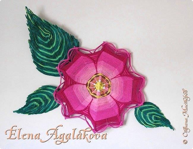 Моя новая мандала - Дикая Роза (Шиповник) .  Для коренных американцев во многих западных племенах Дикая роза считается символом жизни. У славянских народов шиповник – символ здоровья, благополучия, красоты, молодости и любви. В Древней мифологии Дикая Роза является мощным символом любви и обожания. Этот цветок ассоциируется с Афродитой.