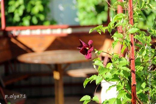 Здравствуйте!!!! Вот и лето к нам пришло,второй день жара не выносимая)) Всё цветёт и радует,вот в очередной раз хочу полюбоваться вместе с вами,мои дорогие!!) фото 33