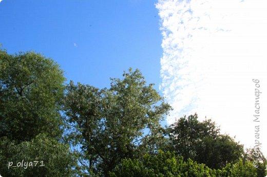 Здравствуйте!!!! Вот и лето к нам пришло,второй день жара не выносимая)) Всё цветёт и радует,вот в очередной раз хочу полюбоваться вместе с вами,мои дорогие!!) фото 58
