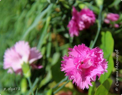 Здравствуйте!!!! Вот и лето к нам пришло,второй день жара не выносимая)) Всё цветёт и радует,вот в очередной раз хочу полюбоваться вместе с вами,мои дорогие!!) фото 134