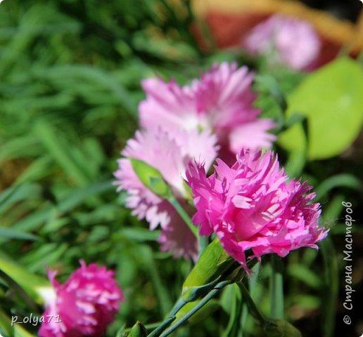 Здравствуйте!!!! Вот и лето к нам пришло,второй день жара не выносимая)) Всё цветёт и радует,вот в очередной раз хочу полюбоваться вместе с вами,мои дорогие!!) фото 135
