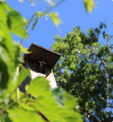 Здравствуйте!!!! Вот и лето к нам пришло,второй день жара не выносимая)) Всё цветёт и радует,вот в очередной раз хочу полюбоваться вместе с вами,мои дорогие!!) фото 8