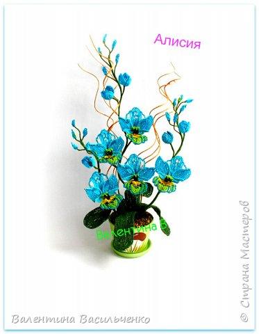 Авторские орхидеи. фото 2