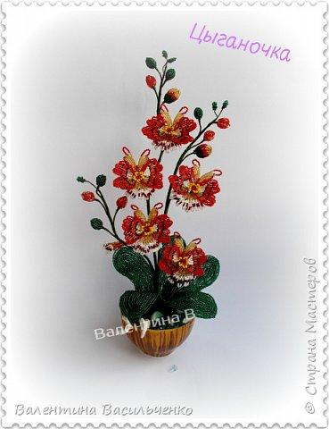 Авторские орхидеи. фото 5