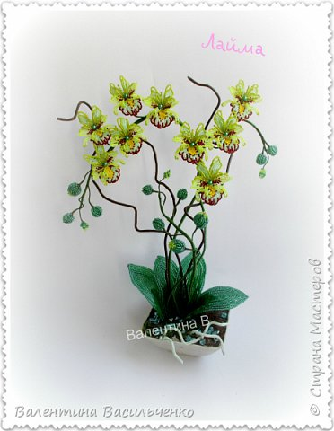 Авторские орхидеи. фото 3