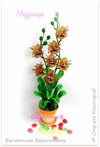 Авторские орхидеи. фото 4