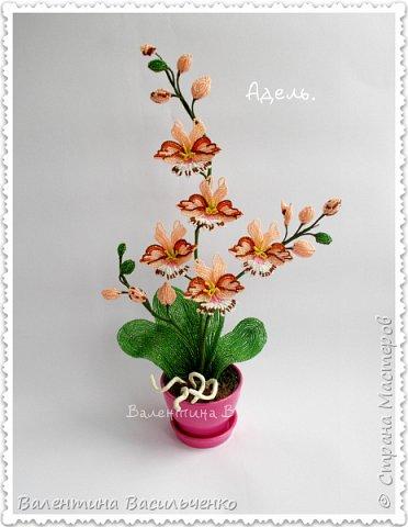 Авторские орхидеи. фото 6