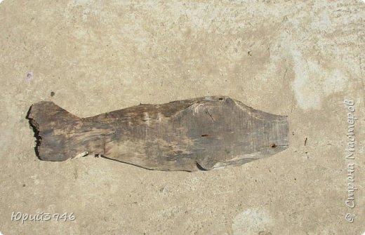 """Рыба над грядкой... Ранее я уже публиковал фотографии рыб над цветочными клумбами. Приведу ещё один пример использования """"бросовых"""" материалов... На  изготовление поделки потратил около трёх часов. Размер рыбы - около полуметра... Это - """"просто рыба"""", пробный вариант. Можно делать их конкретного вида, подбирая соответствующую форму и окраску... Я взял краску, какая оказалась в наличии фото 2"""