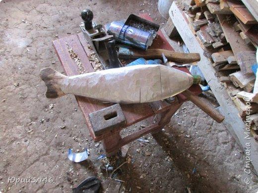 """Рыба над грядкой... Ранее я уже публиковал фотографии рыб над цветочными клумбами. Приведу ещё один пример использования """"бросовых"""" материалов... На  изготовление поделки потратил около трёх часов. Размер рыбы - около полуметра... Это - """"просто рыба"""", пробный вариант. Можно делать их конкретного вида, подбирая соответствующую форму и окраску... Я взял краску, какая оказалась в наличии фото 4"""
