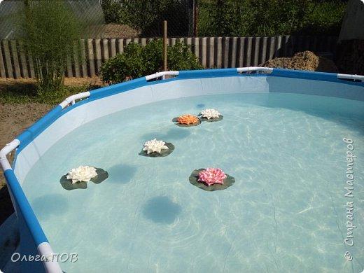 В этом году мы установили на своём участке бассейн. И что-то скучно стало плескаться в нем. И решила я поселить в нём цветочки. Вот такие кувшинки у меня получились. фото 2