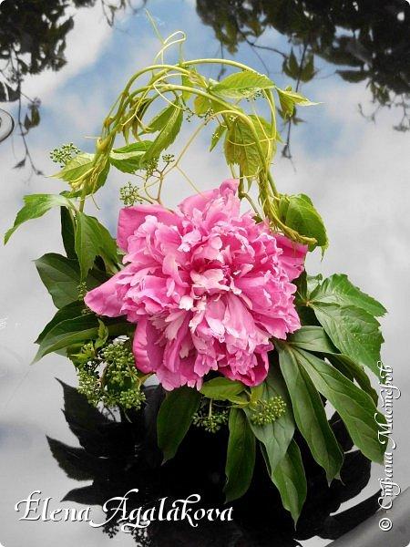 Добрый день! Этим летом я решила осуществить еще одну свою мечту - научится цветочному дизайну. Очень люблю цветы, травки-муравки, деревья и вообще все растения. Уже второй месяц я учусь создавать красоту! Решила поделиться с вами своими композициями и букетами.  фото 4