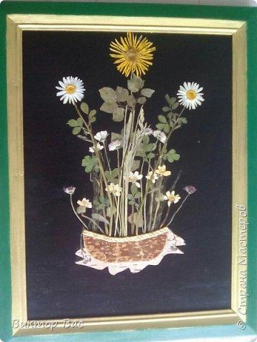 Вот и лето пришло много и много цветов и всякой зелени принесло, только успевай сорвать и сохранить, а картина сама получится. фото 1