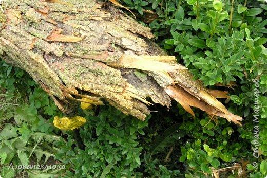 Здравствуйте ! Вот сделала на подарочек))) одной хорошей женщине такую вот садовую уточку , декорированную сухой корой дерева и покрытую лаком . фото 4